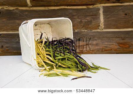 Fresh Green Bean