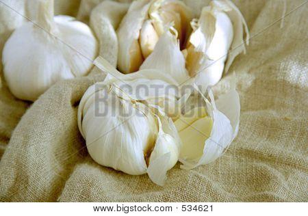 Garlic Cloves I