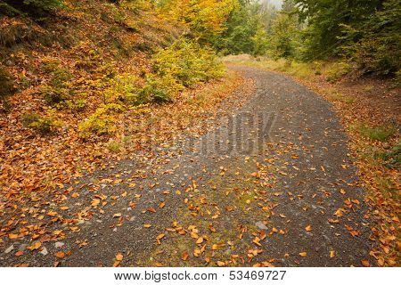 Close up of dead leaves scattered on tarmac curved country road along trees