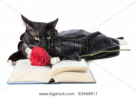 Cat In A Raincoat With A Rose And A Book
