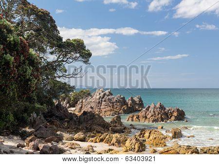 Rocky Beach At Tauranga Nz