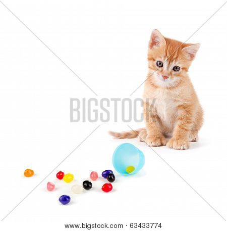 Cute Orange Kitten With Large Paws Sitting Next To Spilled Jelly Beans On A White Background.