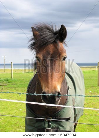 Brown Horse in Grassy Field