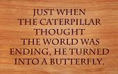 Just when the caterpillar thought the world was ending, he turned into a butterfly - an old proverb on wooden red oak background  poster