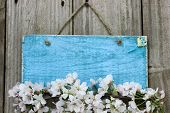 Antique blank blue sign with spring tree blossoms hanging on wood background poster