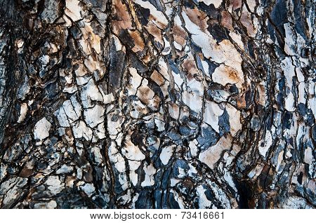 Pattern And Details Of A Tree Bark