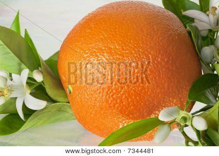 Orange and Blossoms