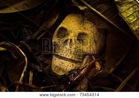 Still Life, Skull With Old Leaves.