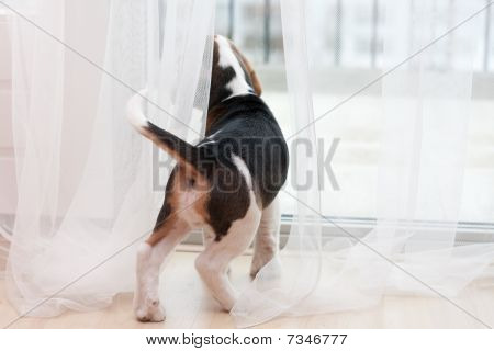 Puppy Looking At Window