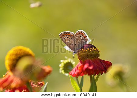 Butterfly on colorful flower