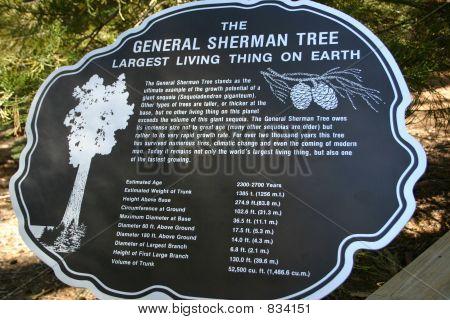 General Sherman - Sequoia