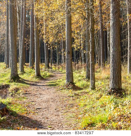 Autumn Colored Tourism Trail In The Woods