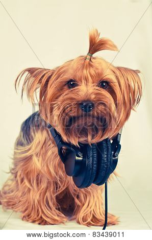 Funny Dog With Headphones