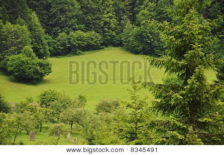 Green meadow in forrest