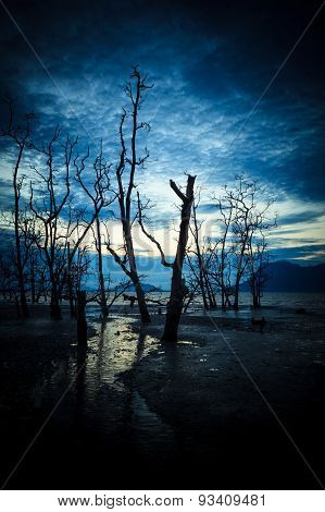 Dead forest and muddy beach at twilight