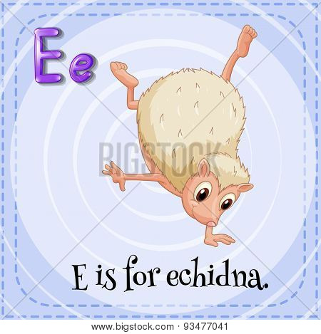 Flashcard letter E is for echidna