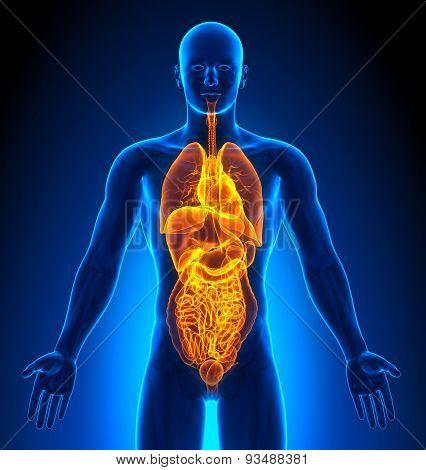 Medical Imaging - Male Organs