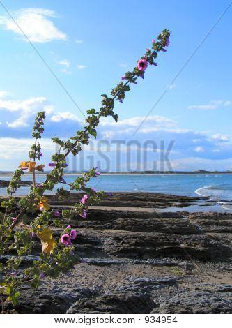 Irishsea