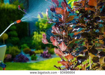 Backyard Garden Pest Control Spraying. Small Tree Spraying in the Garden. poster