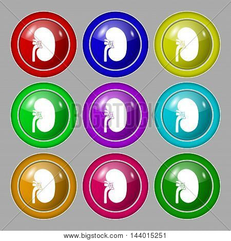 Kidney Icon Sign. Symbol On Nine Round Colourful Buttons. Vector