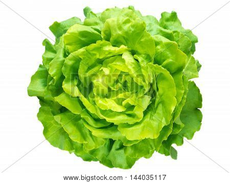 Green lettuce salad head top view isolated on white