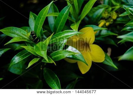 yellow flower with a catapillar on the leaf