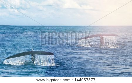 Tail Humpback Whale
