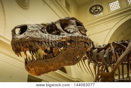 MARCH 22 2016 - CHICAGO: the skeleton of the Tyrannus Saurus Rex at the Field Museum of Chicago.