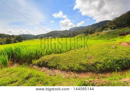Green Terraced Rice Field in Mae Klang Luang Mae Chaem Chiang Mai Thailand