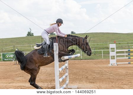 SVEBOHOV CZECH REPUBLIC - AUG 20: Side view of brown horse dislodging a obstacle at