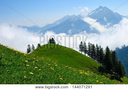 Beautiful meadow with spring flowers on a background of high rocky mountains in Switzerland