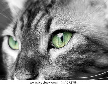 Green eyed monster in black and white