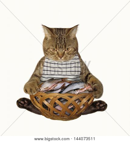 A cat fisher sits beside a basket full of fish on the white background.