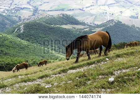 Wild horses in the pasture of a Monte Cucco national park Italy