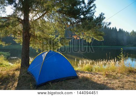 Tourist tent loacated under a pine-tree in summer morning.