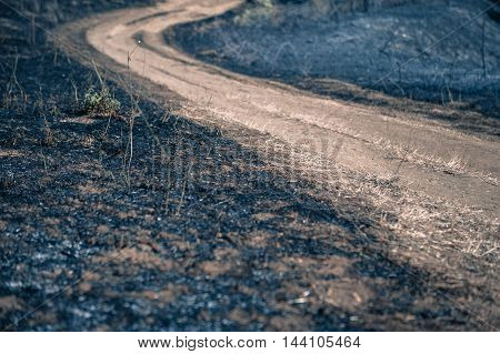 Path between burned blackened fields concept of making scorched earth. Selective focus close up