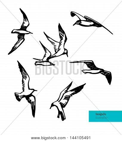 Hand Drawn Flying Seagulls. Vector Set Illustration. Black on White Bakground.