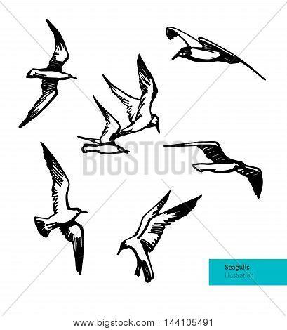 Hand Drawn Flying Seagulls. Vector Set Illustration. Black on White Bakground.