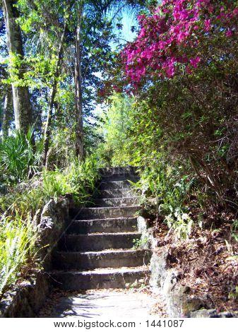 Azalea Staircase