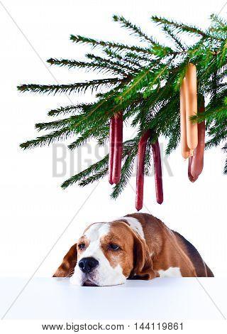 Sad Holiday At A  Lonely Dog