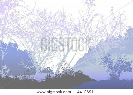 Panoramic winter forest landscape with silhouettes of plants and trees. Winter landscape with frozen plants and bare trees
