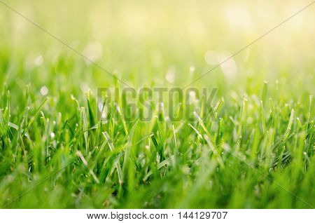 Abstract image of green grass with sun flare