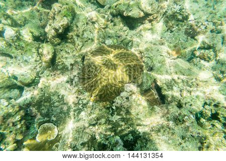 this is a brain coral reff underwater fin