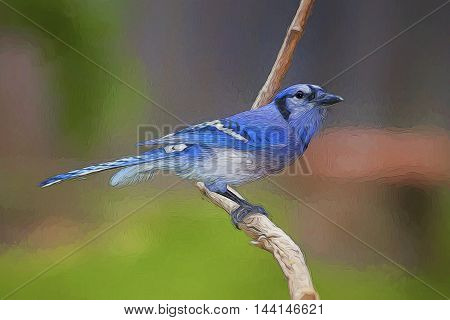 Illustrative image of Blue Jay sitting of a branch.