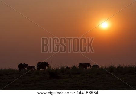 Silhouette of a herd of elephants at sunset in the Chobe National Park in Botswana; Concept for travel safari and travel in Africa