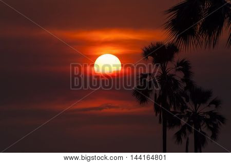 Silhouette of palm trees in the Okavango Delta in Botswana; Concept for travel safari and travel in Africa