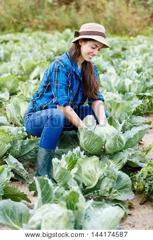 Woman in plantation of cabbage. Gardener with cabbage in garden. Harvest. Young farmer harvesting cabbage. Happy farmer with cabbage. Girl shows a crop of cabbage in the garden