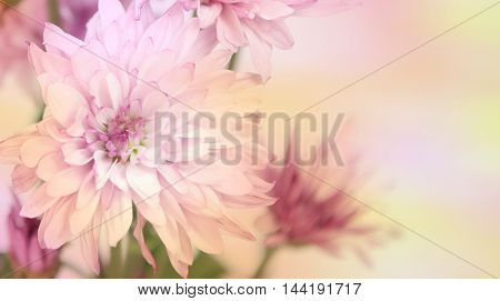 Pastel pink flowers with a text area on the right with a blurred soft background.