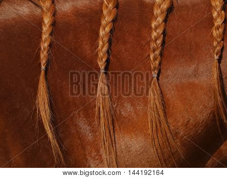 A braided mane on a red sorrel colored horse mane.  Healthy fur hair growth.