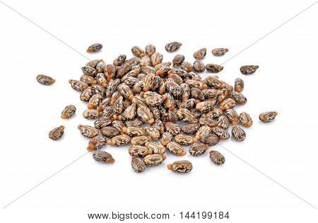 Castor seeds on white background nature close up